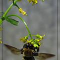 Busy Bee by Deborah Johnson