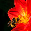 Busy Bee by Diane Macdonald