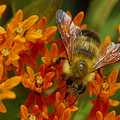Busy Bee by James Gallion