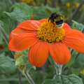 Busy Bee by Jerry Deroo