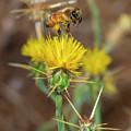 Busy Bee by Jonathan Hansen
