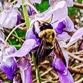 Busy Bee by Lisa Dennae