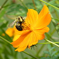 Busy Bee by Margaret G Calenda