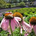 Busy Bee by Nancy Ingersoll