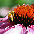 Busy Bee by Smilin Eyes  Treasures