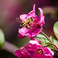 Busy Bee by Steve Marler
