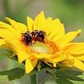Busy Bees by Gayle Miller