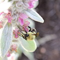 Busy Bumble by Alexis Ketner