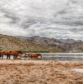 Butcher Jones Horses by Sandy Klewicki
