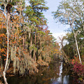 Butler Creek In Autumn Colors by Gregory Schultz