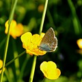 Buttercup Butterfly by Noah Cole