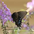 Butterflies 8587 by Captain Debbie Ritter