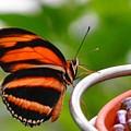 Butterflies Are Blooming by Debra  Miller