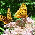 Butterflies by Eric Workman