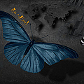 Butterflies by Maria Astedt