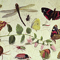 Butterflies, Insects And Flowers by Jan Van Kessel