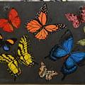 Butterflies by Jacqueline Del  Fonso