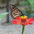 Butterflies Lunch by William Patterson