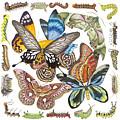 Butterflies Moths Caterpillars by Lucy Arnold