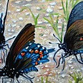 Butterflies Original Oil Painting by Natalja Picugina
