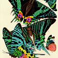 Butterflies, Plate-7 by Painter of the 19th century