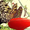Butterflies by Rebecca Malo