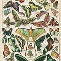 Butterflies by Steven Parker