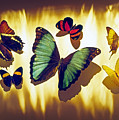Butterflies by Tony Cordoza