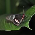 Butterfly 1 by Rich Bodane