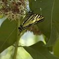 Butterfly 1 by Sara Stevenson