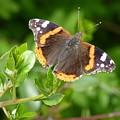 Butterfly 10 by Jean Bernard Roussilhe