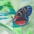 Butterfly 10 by Judith Rice