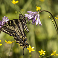 Butterfly 10 by Reed Tim