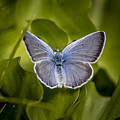 Butterfly 11 by Reed Tim