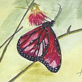 Butterfly 12 by Judith Rice