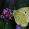 Butterfly 18718 by Ray Shrewsberry
