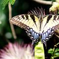 Butterfly 2 by Everett Spruill
