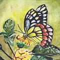 Butterfly 2 by Judith Rice