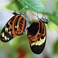 Butterfly 2 by Kristina Jones