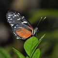 Butterfly 2 by Rich Bodane