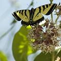 Butterfly 2 by Sara Stevenson