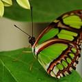 Butterfly 2 by Scott Gould