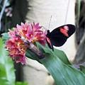 Butterfly 2 by Sheli Kesteloot