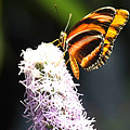 Butterfly 2 by Tom Prendergast