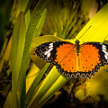 Butterfly 23 by Larry White