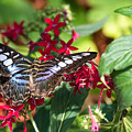 Butterfly 3 by Wesley Farnsworth