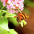 Butterfly-4 by Craig Hosterman
