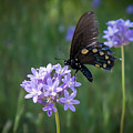 Butterfly 4 by Reed Tim