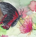 Butterfly 5 by Judith Rice