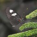 Butterfly 5 by Rich Bodane